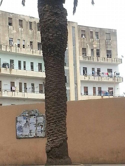 Asmara's Great Architectural
